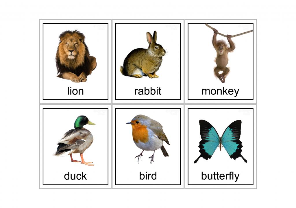 15 Animal Flash Cards   Kittybabylove   Animal Snap Cards Printable