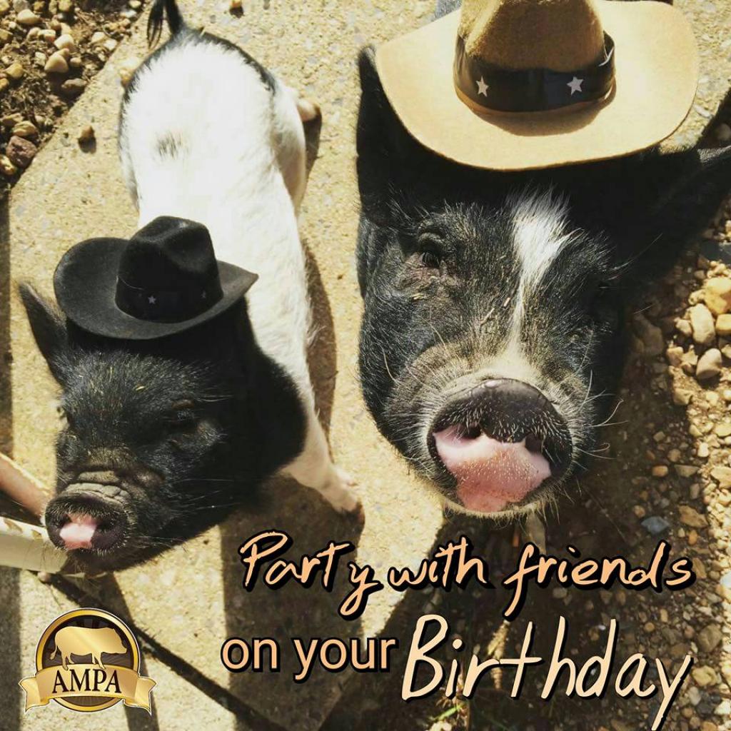 Ampa Mini Pig Birthday Cards | American Mini Pig Online Store | Pig Birthday Cards Printable
