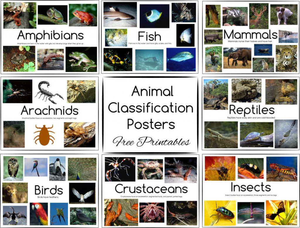 Animal Classification Posters And Games - Free Printables | Free Printable Animal Classification Cards