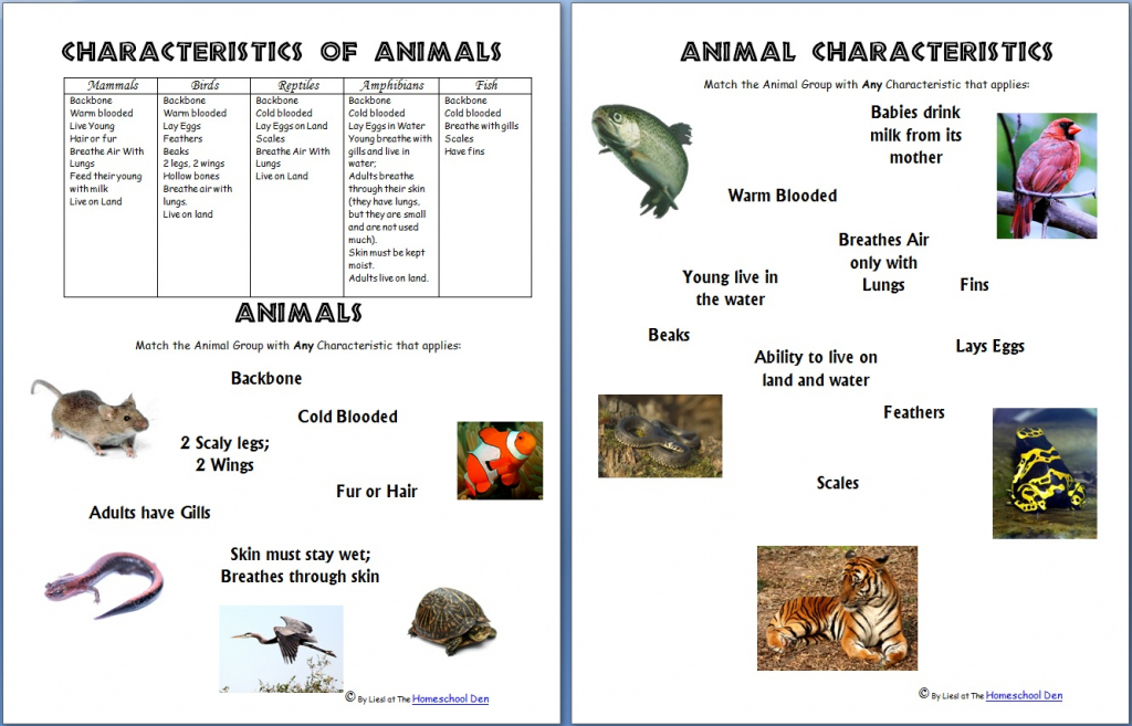 Animals And Their Characteristics (Free Worksheet) - Homeschool Den | Free Printable Animal Classification Cards