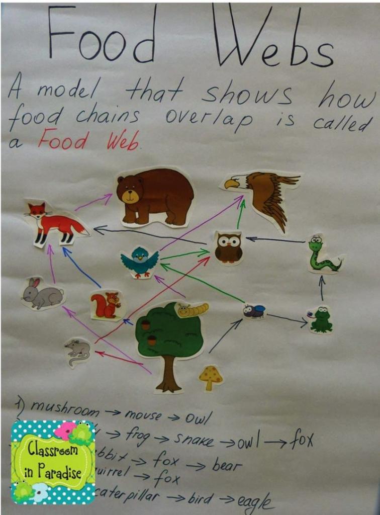 Food Chains And Food Webs | Sierra Nevada Animals | Food Chain | Printable Food Web Cards
