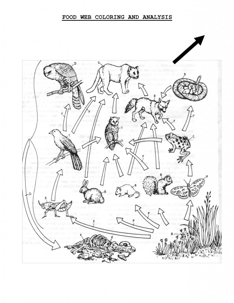 Food Web Coloring Sheet | Scope Of Work Template | Teach | Science | Printable Food Web Cards