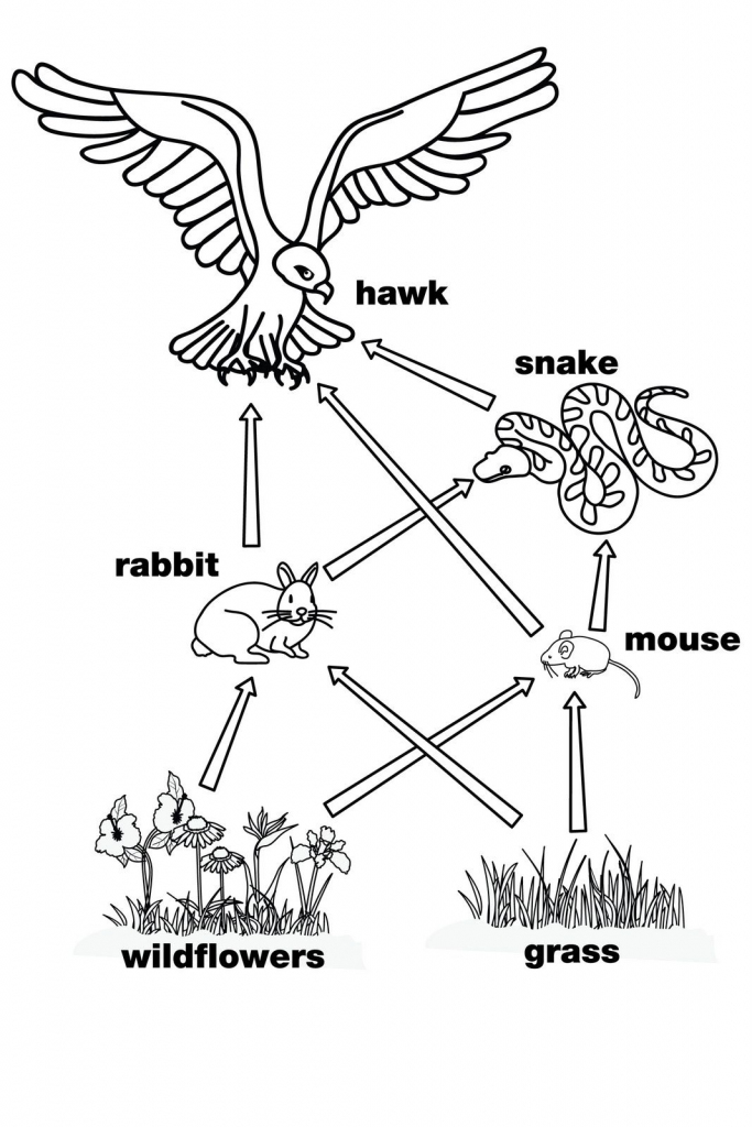 Food Web. This Is A Perfect Diagram For The Food Web Wearables At | Printable Food Web Cards