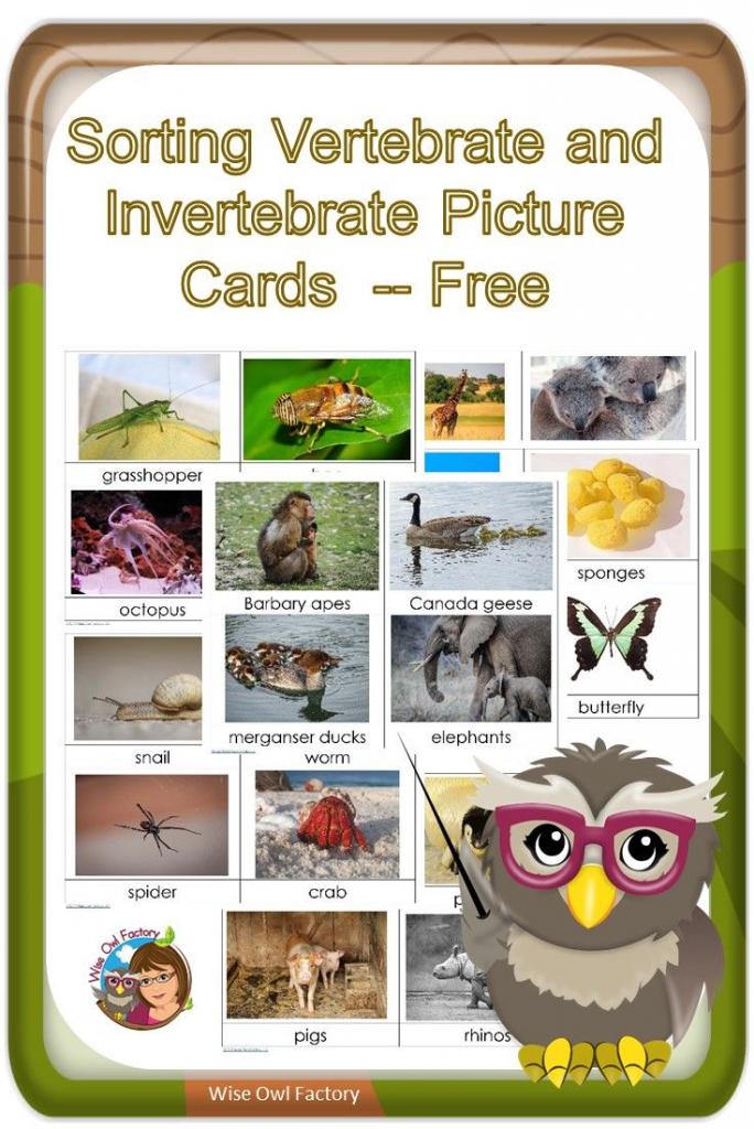 Invertebrates And Vertebrates Card Sort Free Pdf | Science | Free Printable Animal Classification Cards