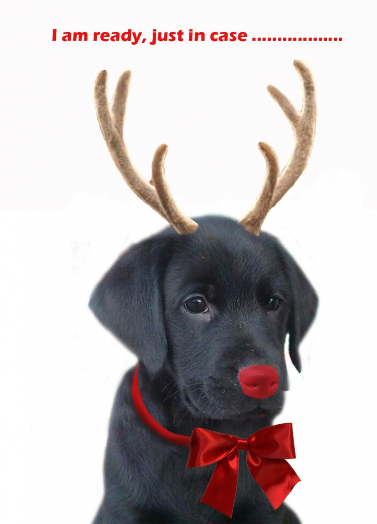 Pinlori Hatton On Puppers   Christmas Dog, Christmas Puppy, Free   Christmas Cards For Dogs Printable