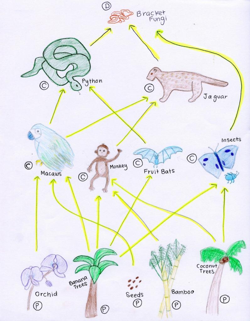 Tropical Rainforest Food Web | A-Z ~ Art Of Teaching | Rainforest | Printable Food Web Cards